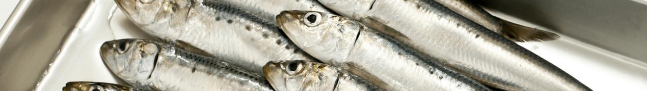 La consommation de poisson permet d'éviter la perte de poids