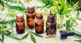 Cannabis médical et cancer