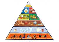 La pyramide alimentaire active