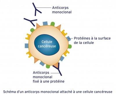 anticorps-monoclonal