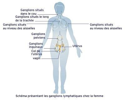 Le système lymphatique chez la femme