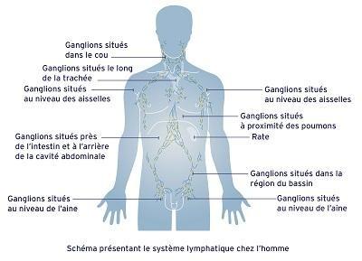 Le système lymphatique chez l'homme