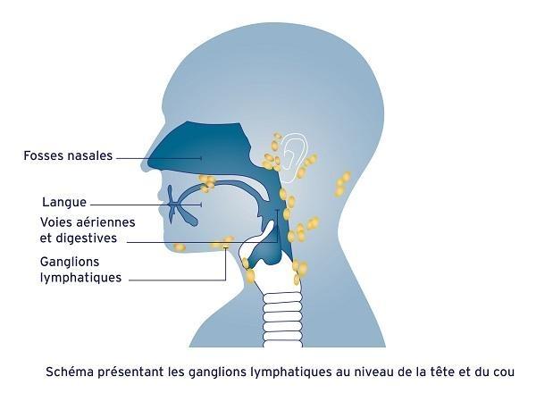 Ganglions de la tête et du cou
