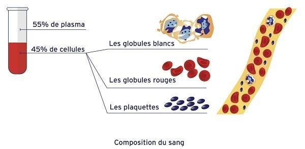 La composition du sang